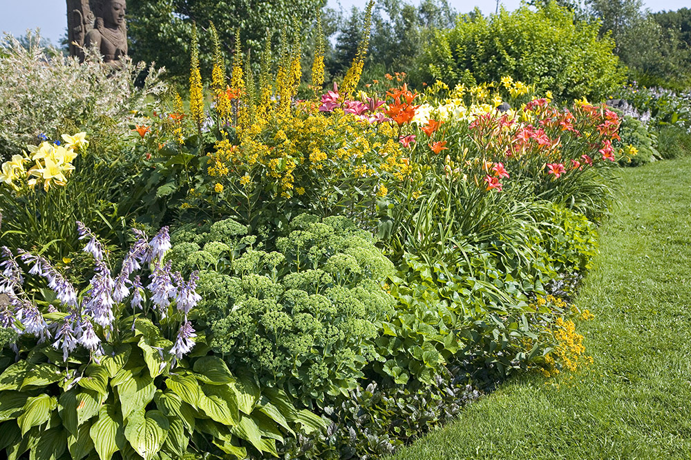 Socal landscaping 5 drought tolerant plants for your yard and picture mightylinksfo